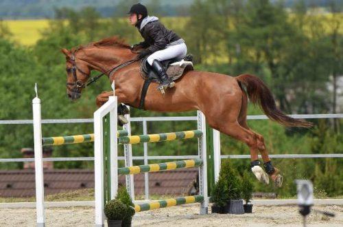 Foto Equitacion